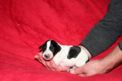 Nr. 6 Black parti boy 1week body