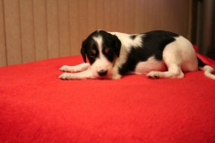 nr2 boy 3 weeks lay