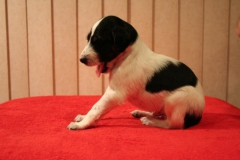 nr6 boy 3 weeks sit