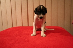 nr8 boy 3 weeks sit